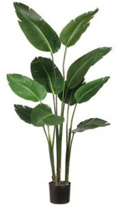 EF-605  	5' Bird of Paradise Plant in Plastic Pot Green (Price is for a 2pc Set)