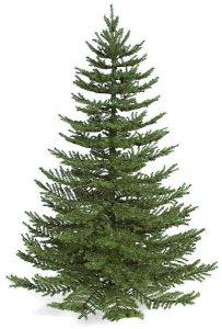 "7.5' Ballard Spruce Christmas Tree  2,114 Green Tips - 66"" Width - Metal Stand"