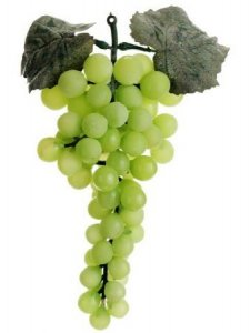 "EF-409   	9"" Round Grapes x69  Green  (Price is for a Dozen Set)"