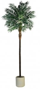 EF-1826  Bulb Areca Palm Tree Comes on a natural coco trunk