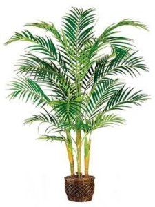 EF-4645 6' Deluxe Areca Palm Tree in Basket  Green