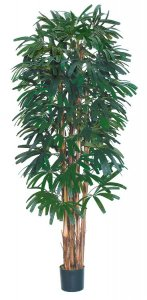 EF-1880  7' Raphis Palm has 6 Natural Trunks with 812 Leaves and comes potted in a non-decorative container
