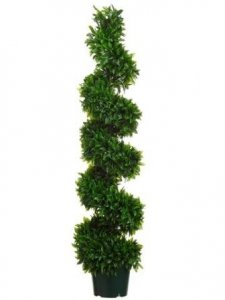 EF-555  	5' Italian Bayleaf Spiral Topiary in Black Plastic Pot Green (Price is for 2 Pc Set) Indoor/Outdoor