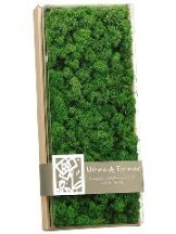 "EF-094  4.1""Hx7""Wx17""L Assorted Preserved Reindeer Moss in Box Green   (Price is for 4 Boxes)"