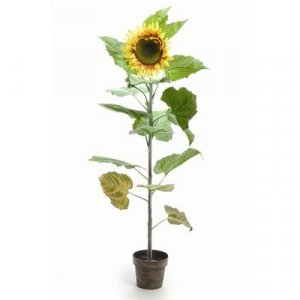 EF-476  5' Potted Sunflower