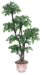 EF-4045   6' Ming Aralia Tree comes on 5 Natural Dragonwood Trunks arranged in 6 Tiers with 2,856 Leaves