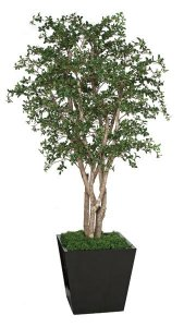 8' Live Oak Tree - Natural Wood Trunks - 7,128 Leaves