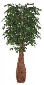 7' Ficus Tree - Natural Trunks - Custom Made