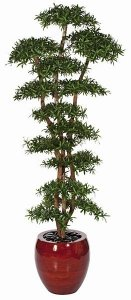 10' Podocarpus Shelf Tree - Natural Trunks - 18,396 Green Leaves