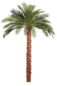 10' Phoenix Palm Tree - Natural Boot Trunk - 28 Fronds- FIRE RETARDANT