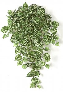 33 Inch Soft Touch Peperomia Bush