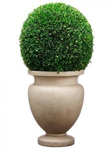 "45""Hx23""Wx23""L Large Preserved Boxwood Ball in Cement Planter Green"