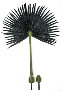 75 Inch Outdoor Washingtonia Palm Branch