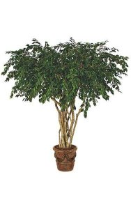 8' Ficus Tree - Natural Trunks - 5,472 Leaves - Green - Weighted Base - FIRE RETARDANT - Custom Made