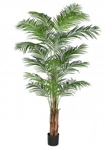 Earthflora's 8 Foot Areca Palm Tree