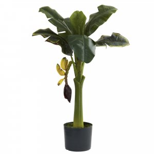 3' Banana Tree -hanging fruit Weighted Base