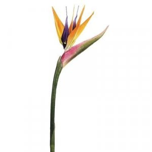 "37"" Bird of Paradise Spray  Natural"