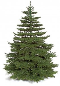 "10' Windswept Pine Christmas Tree - Full Size - 84"" Width - Metal Stand"