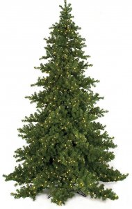 15' Nikko Fir Christmas Tree - Full Size - 2,750 Warm White LED Lights