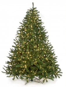 10 Foot Virginia Pine Christmas Tree - Full Size - 1,852 Green Tips - Clear Lights