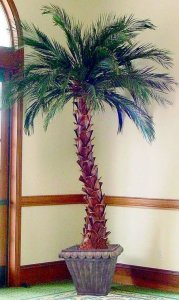 preserved_Palm_Tree