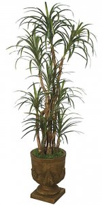 6' Dracaena Marginata - Natural Trunks - 183 Leaves  - Green/Red