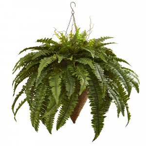 "40"" Giant Boston Fern with Cone Hanging Basket Indoor/Outdoor"