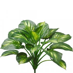 "22""  Hosta Plant  Green Cream"