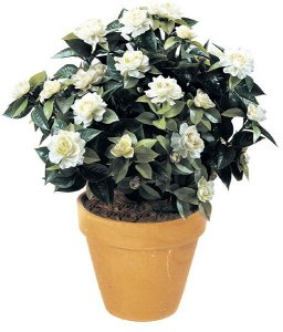 "28"" Gardenia Bush - 257 Leaves - 17 Flowers - 11 Buds - White"