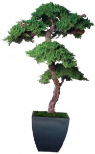 6' Preserved Bonsai Kage Bonsai comes in Black  Planter Shown