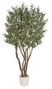 7 Foot Artificial Olive Tree w/ Olives on Natural Wood