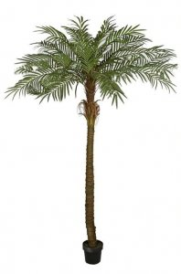 7 FOOT Outdoor PHOENIX PALM TREE X 18 FRONDS
