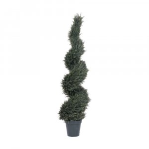 5' Outdoor Pond Cypress Spiral Tree