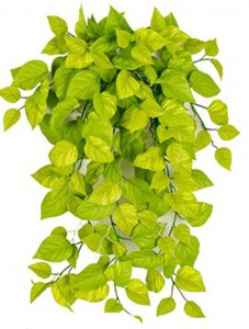 "36"" FireSafe Light Green Pothos Ivy Bush"