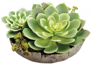 "6.5"" Succulent Garden in Cement Pot Green"