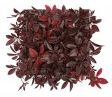 10 Inch X 10 Inch X 4 Inch Outdoor Uv Schefflera Wall Mat In Green Or Burgundy