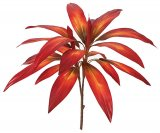 "25"" Cordyline Plant - 21 Leaves - Bare Stem"