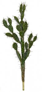 Prickly Pear Cactus With Needles - 42 Inches Or 52 Inches Tall