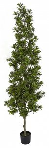 7 Foot Or 8 Foot Podocarpus Topiary Tree